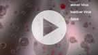 Luftfeuchte und die Lebensdauer von Viren